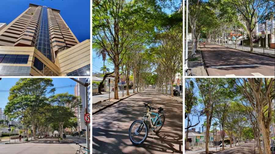 A arborizada Avenida Padre Anchieta com o edifício onde está um fantástico restaurante com visão de 360 graus da cidade, localizado no 40. andar (Terrazza40).