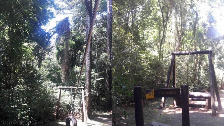 """Araucárias no Bosque Reinhard Maack: paisagem comum na """"Trilha da Aventura""""."""