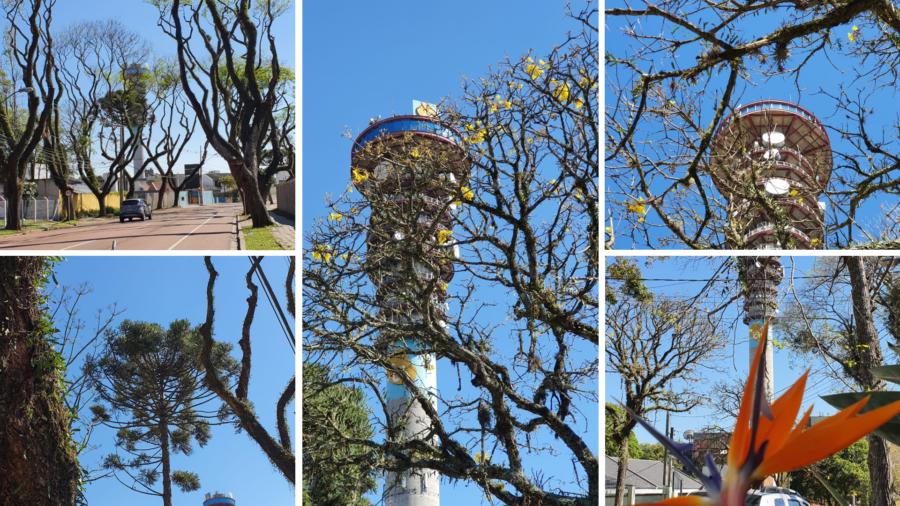 Torre Panorâmica da TELEPAR (Oi).