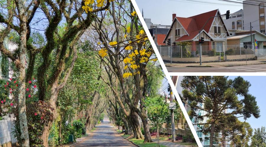 Cenário do bairro: verde em abundância, casas de arquitetura diferenciada e modernos edifícios.