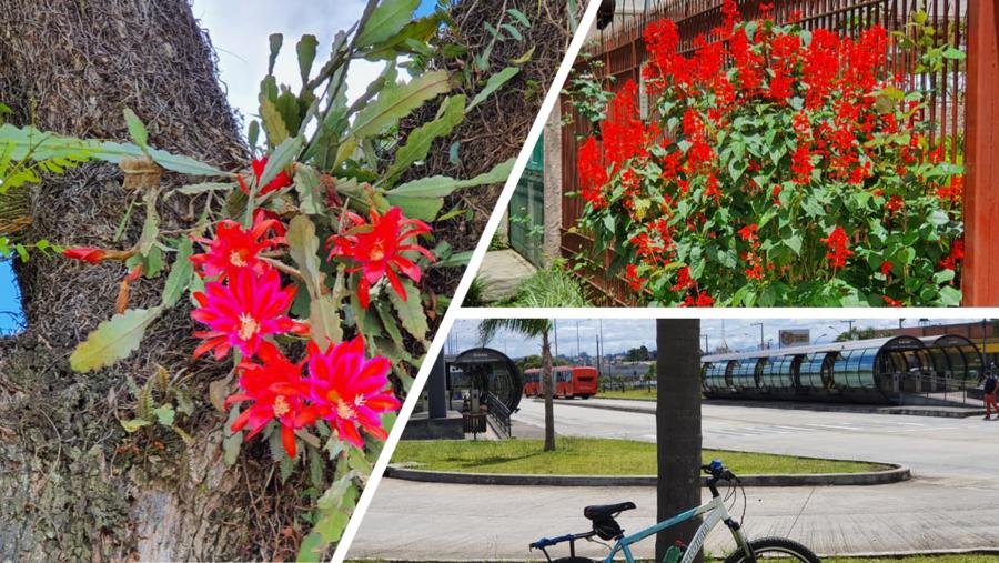 Flores no Fanny e a Estação Santa Bernadete.