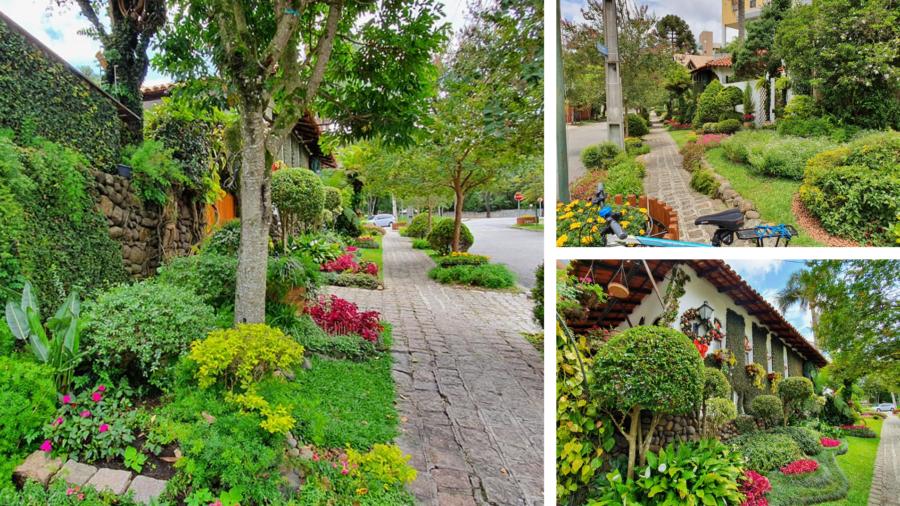Calçadas no Juvevê mostram maravilhosos jardins coloridos e muito bem conservados.