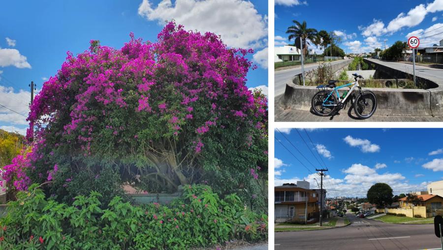 Primavera em plena primavera, o córrego da Av. Santa Bernadete e a vista do bairro.
