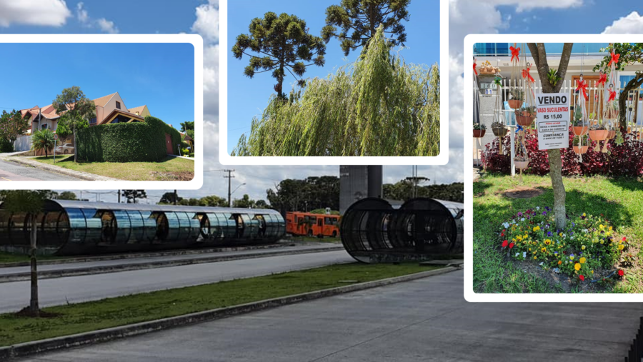 Conjunto de casas típico do Xaxim, Estação Xaxim, as imponentes araucárias e uma iniciativa espetacular (pegue seu vaso e deixe o dinheiro na caixa de correio!)