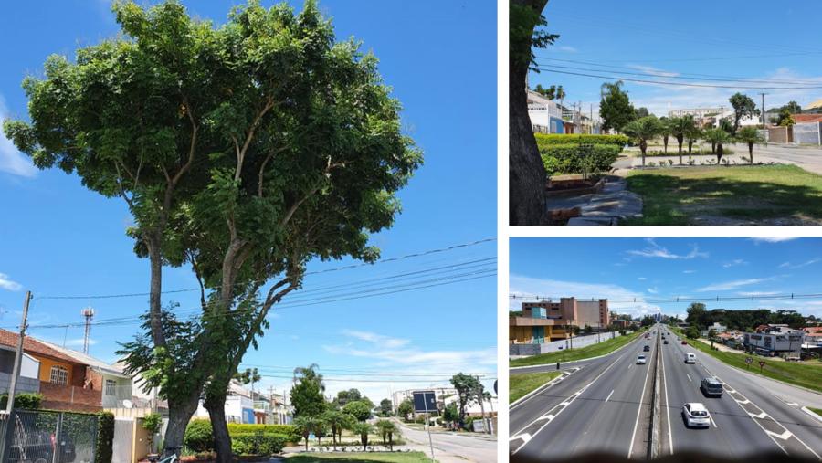 Avenida Florianópolis com largas e arborizadas calçadas. Vista da BR-277: do lado esquerdo Jardim das Américas e do lado direito, Cajuru.