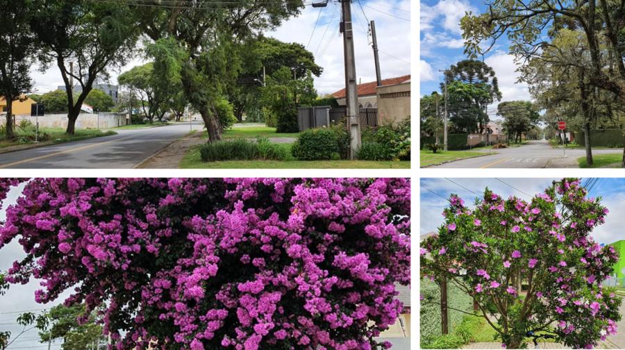 Calçadas verdes e mais largas que as ruas... flores sempre presente no Jardim das Américas!