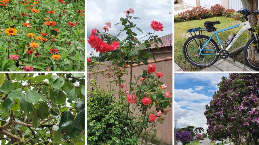 """Flores e até um """"pé de araçá"""" (foto do canto inferior esquerdo) nas ruas do Boa Vista."""
